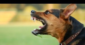 TOP 10 Dog barking videos compilation 2016 ♥ Dog barking sound - Funny dogs