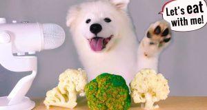 ASMR Dog Eating & Funny Reacts CAULIFLOWER x BROCCOLI Mukbang