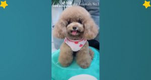 Cute Dog videos  - Cute and Funny Dog Moments Compilation #3