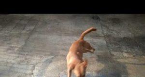 Funny Dog Mickey Playing Keep Away
