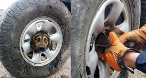 HILARIOUS DOG FAILS COMPILATION OF 2019 (FUNNY!)