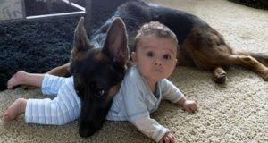 Funny Pets Being Overprotective! (Dogs Protecting Owners, Babies, Toys!)