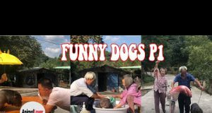 Cool Dogs - Funny Dogs in the world   Try not to laugh P1 😂 😂 😂