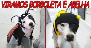 VIRAMOS ABELHA E BORBOLETA - Funniest DOGS IN COSTUMES