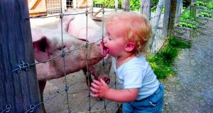 Funny Baby Playing With Animals - Funny Fails Baby Video