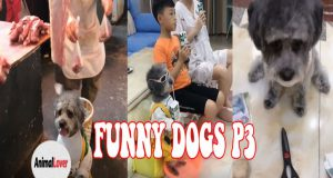 Cool Dogs - Funny Dogs in the world   Try not to laugh P3 😂 😂 😂
