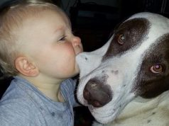 Dog & Baby Funny fails