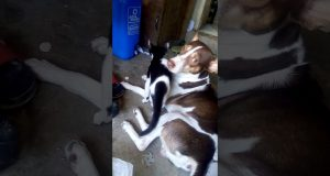 Funny moment with my cat and dog