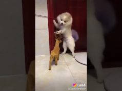 Funny movement dog so cute funny😂😂😂