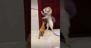 Funny movement dog so cute funny😂😂😂