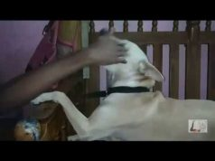 Funny dog playing with boy | Dog playing video | Funny dog playing home