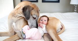 Brave Dogs Try to Protect Babies| Funny Dogs Video