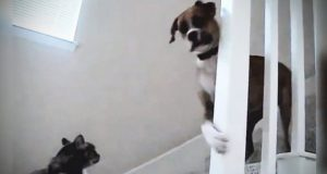Dogs Afraid of Cats  (HD) [Epic Laughs]