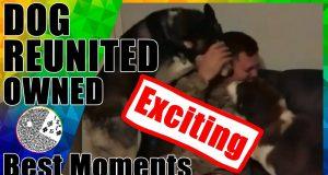 Funny Fails 2019 | Best Moments | Reunited Dog Friends | Funny Videos 2019