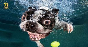 Dog Fails Top 10 Compilation #4