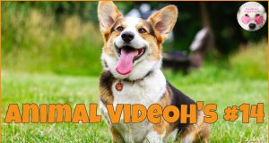 Funny Animals, Funny Pets, Cats, Dogs, Kittens and Puppies - Animals are Amazing! #14
