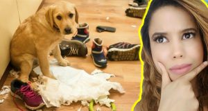 FUNNY DOG FAILS | GUILTY DOGS