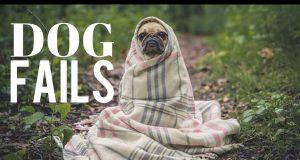 DOG FAILS #3