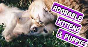Cute Pets Doing Funny Things (2019) |  Cute Dogs and Puppies and Cats | Cute Pets to Own