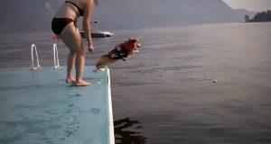 Funny Dog Fails Compilation | Dog Girl xxx