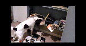 FUNNY DOG IN PRISON VIDEO - SuperDog