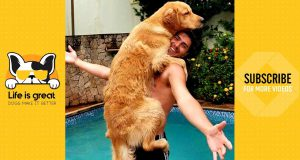Funniest Dog 🐶 Time For Hug | Cute Dogs Video 2019