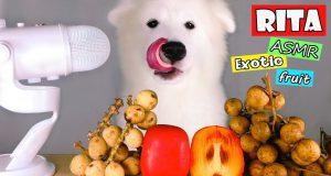 ASMR Dog Eating EXOTIC FRUIT (Funny Reaction)
