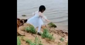 funny videos dog protect girl