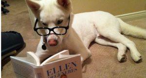 tik tok funny dog compilation #2