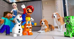 THE BEST ANIMATIONS IN REAL LIFE COMPILATION : FUNNY DOGS LOUIE & MARIE