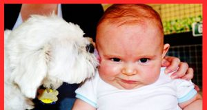 Funny Babies And Dogs Are Best Friends - WE LAUGH