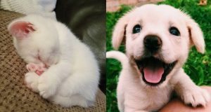 💗Aww - Funny and Cute Dog and Cat Compilation 2019💗 #24 - CuteVN