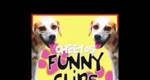Funny Cute Dog Clips