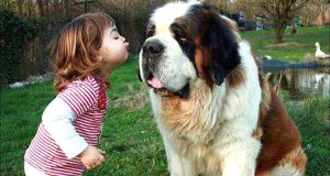 Funny Moments Of Dog And Baby - There's nothing greater than Dog and Baby