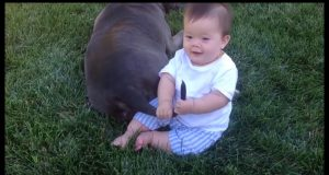 Funny baby playing with dog and fail ★ Funny animal videos ★ Funny Baby and Pet