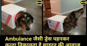 Ambulance जैसी ड्रेस पहनकर कुत्ता निकालता है साइरन की आवाज | Funny Dog Video