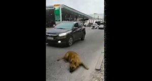 Funny act of a dog, watch till end