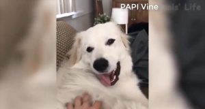 funny cat and dog videos try not to laugh - top 200 funny animals vines || funnyvines