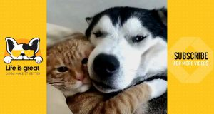 Funniest Dog 🐶 We Are Friend | Cute Dogs Video 2019