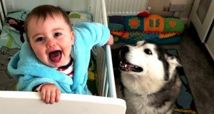 Funny kids Laughing Hysterically With Their Dogs 2019
