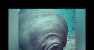 Funniest Animals 😺🐶🐐🐵🐴🐯 Fails Videos Compilation