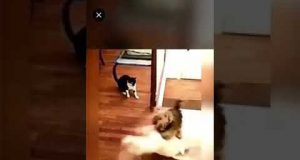 New dog funny video 2019