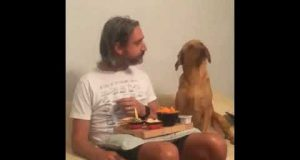 The owner and the dog - Funny video