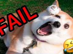 Hilarious and Funny Animal Fails 2019