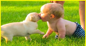 Funny Dog And Baby Compilation - Funny Baby Fail Videos