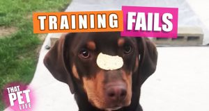 Dog Training FAILS | Try Not to Laugh Challenge