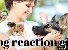 බව්වාගේ කොමලේ ❤❤/ dog funny video
