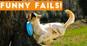 Funny Moments of Cats and Dogs Fails Compilation 2020