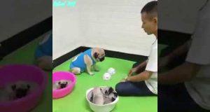 Dog 🐕 And Man funny video 😂 || nsm salman