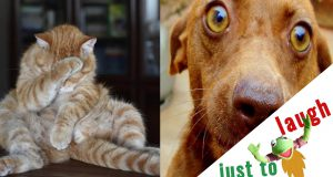 IF YOU WANT TO LAUGH LIKE HELL🤣, WATCH THIS! - Super FUNNIEST CATS AND DOGS compilation😇